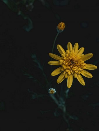 Flower Yellow Macro 1620x2160 1 340x453