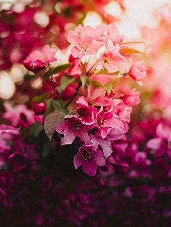 Flowers Bloom Branch Light 1620x2160 1 340x453