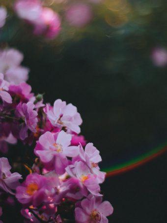 Flowers Pink Macro 1620x2160 1 340x453