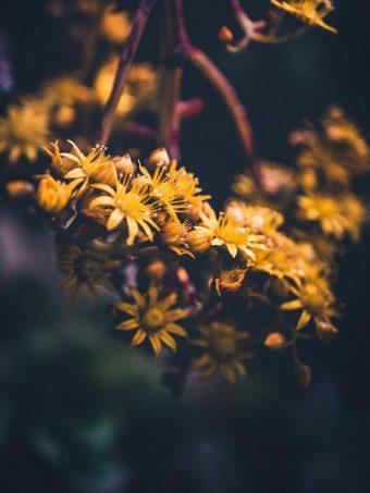 Flowers Yellow Bloom 1620x2160 1 340x453