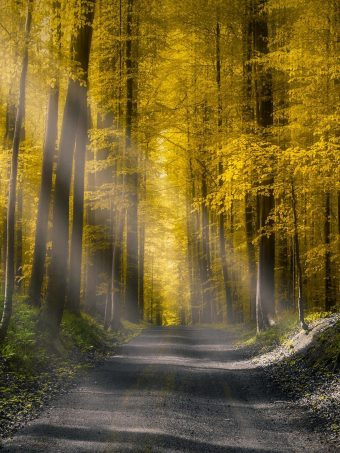 Forests Roads Rays Of Light It Wallpaper 1620x2160 1 340x453