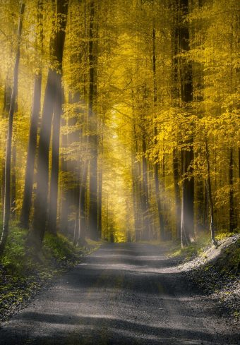 Forests Roads Rays Of Light It Wallpaper 1640x2360 1 340x489