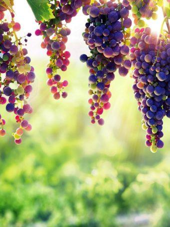 Grape 32 Wallpaper 1620x2160 1 340x453