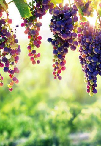 Grape 32 Wallpaper 1640x2360 1 340x489