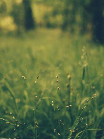 Grass Blur Field 1620x2160 1 340x453