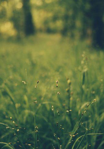 Grass Blur Field 1640x2360 1 340x489