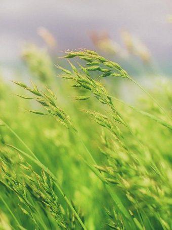 Grass Field Wallpaper 1620x2160 1 340x453