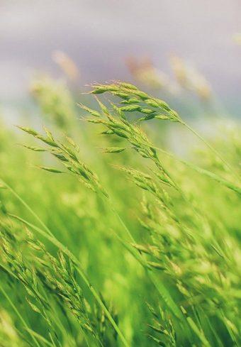 Grass Field Wallpaper 1640x2360 1 340x489