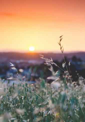 Grass Flowers Blur 1640x2360 1 340x489