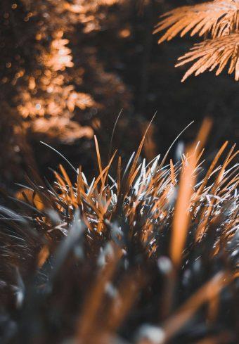 Grass Plant Blur 1640x2360 1 340x489