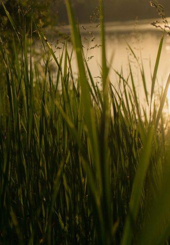 Grass Sunset Sw Wallpaper 1640x2360 1 340x489