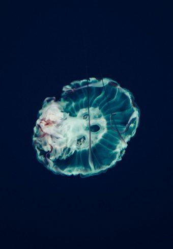 Jellyfish Underwater World 1640x2360 1 340x489