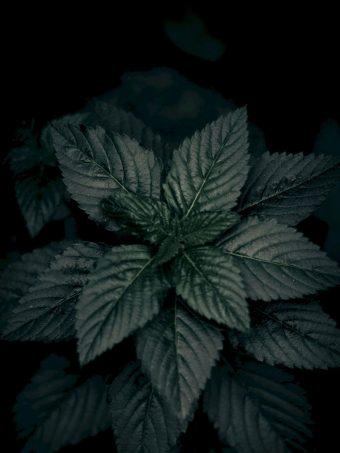 Leaves Plant Green 1620x2160 1 340x453