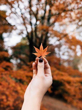 Maple Leaf Autumn Hand 1620x2160 1 340x453