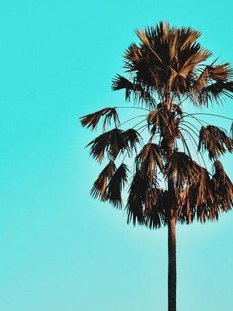 Palm Tree Sky 1620x2160 1 340x453