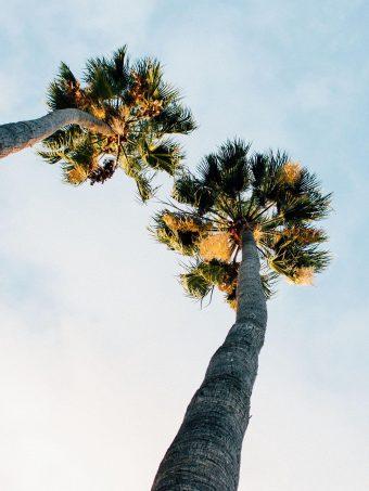 Palm Trees Sky Clouds 1620x2160 1 340x453