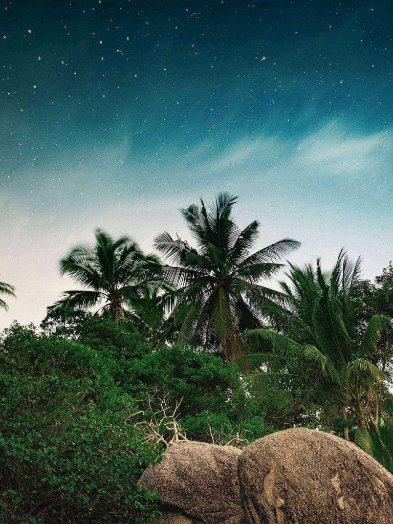 Palm Trees Starry Sky Stones 1620x2160 1 768x1024