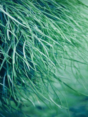 Pure Grass Wallpaper 1620x2160 1 340x453