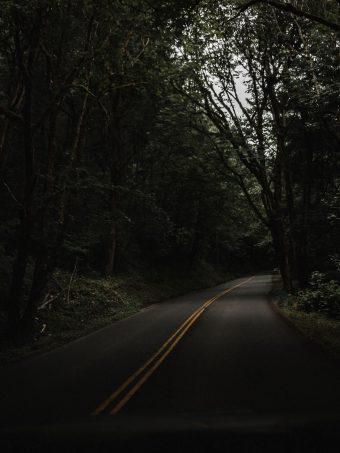 Road Trees Asphalt 1620x2160 1 340x453