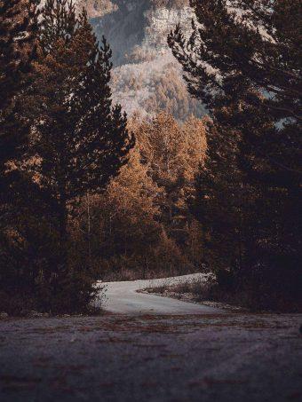 Road Trees Turn 1620x2160 1 340x453