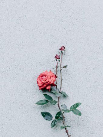 Rose Wall Minimalism 1620x2160 1 340x453