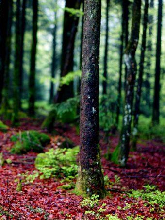 Trees Moss Bark Forest 1620x2160 1 340x453
