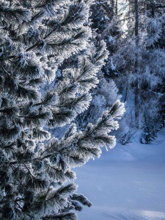 Winter Snow Tree 1620x2160 1 340x453