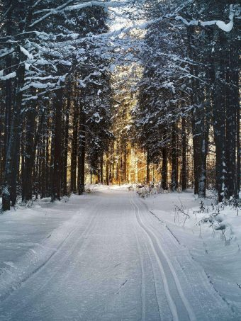 Winter Trees Forest Road 1620x2160 1 340x453