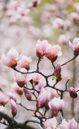 iPhone Flower Wallpaper 003 340x550