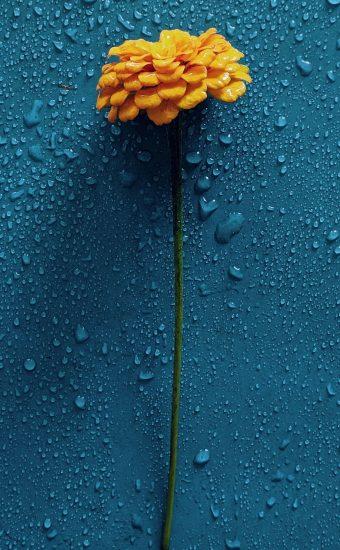 iPhone Flower Wallpaper 004 340x550