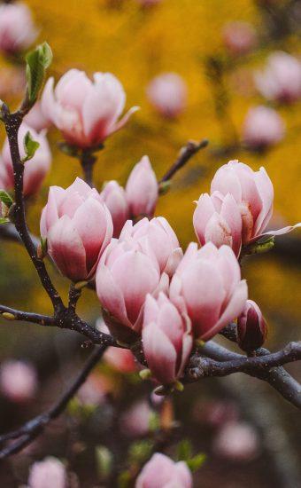 iPhone Flower Wallpaper 005 340x550