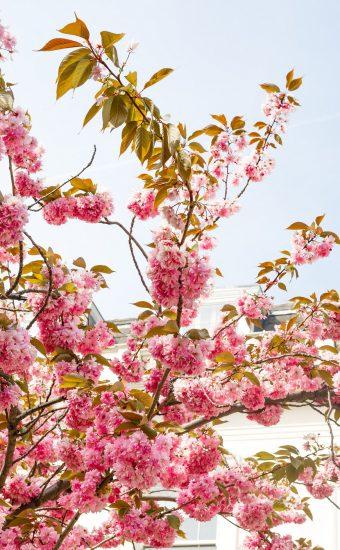 iPhone Flower Wallpaper 009 340x550