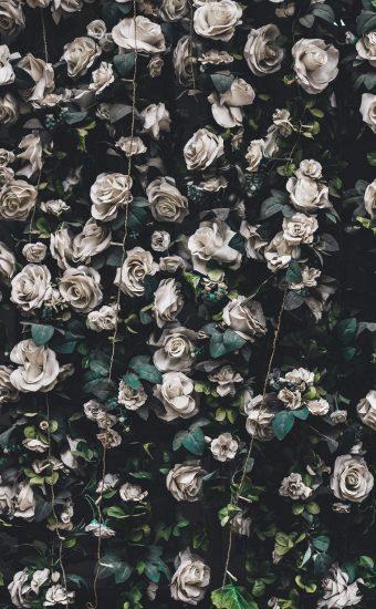 iPhone Flower Wallpaper 010 340x550