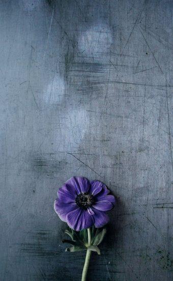 iPhone Flower Wallpaper 013 340x550