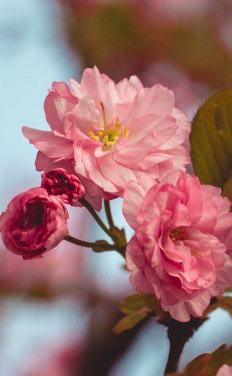 iPhone Flower Wallpaper 015 340x550