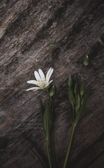iPhone Flower Wallpaper 017 340x550