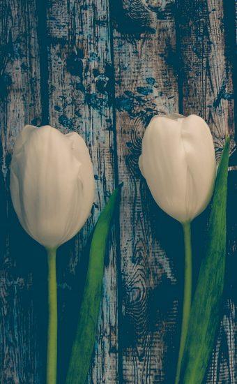 iPhone Flower Wallpaper 019 340x550