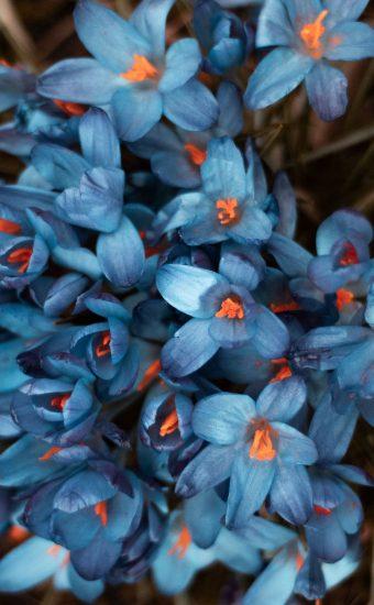 iPhone Flower Wallpaper 021 340x550