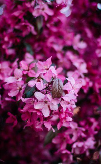 iPhone Flower Wallpaper 026 340x550
