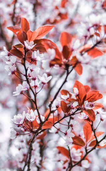 iPhone Flower Wallpaper 027 340x550