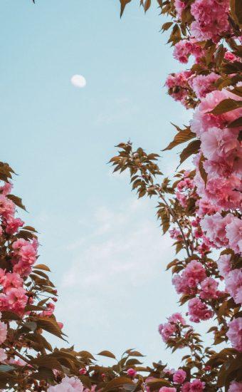 iPhone Flower Wallpaper 028 340x550