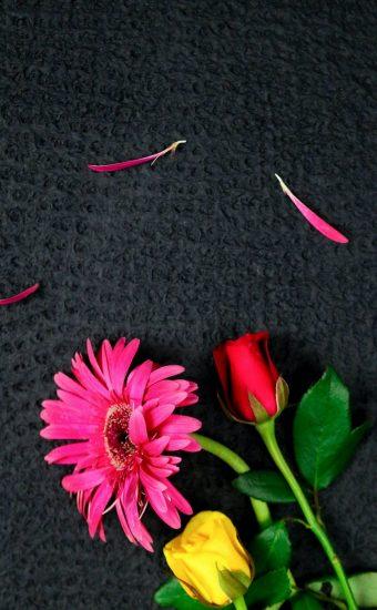 iPhone Flower Wallpaper 029 340x550